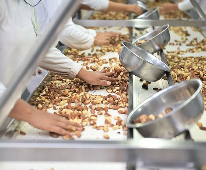 Acre: Em menos de um ano, usina de castanha administrada por cooperativa, gerou dezenas de empregos