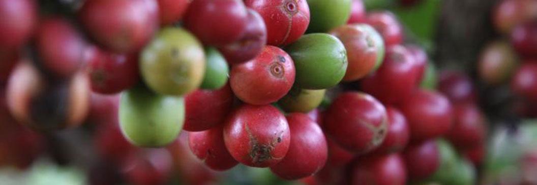 MA: agricultura familiar impulsiona produção no estado