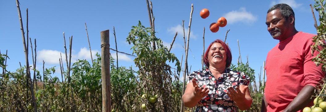 Agricultura familiar leva dignidade para o campo