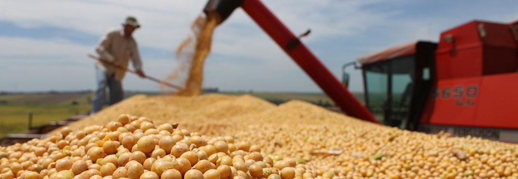 Cooperativa lança pesquisa sobre produtividade de soja em Tocantins